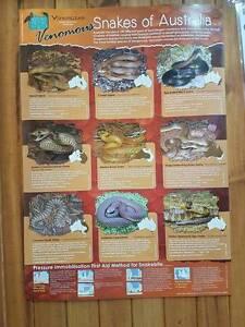 Reptile Posters Salisbury North Salisbury Area Preview