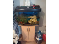 Tank with Stand, Fish and Accessories
