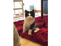 Loui looking for a loving home urgently