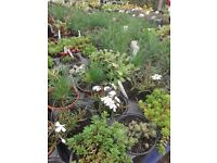 Garden Plants Flowers Vegetables and Herbs