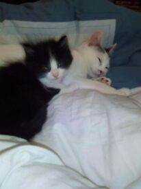 Needing to rehome my two cats