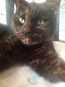 WILMA (IF036-19) - rescue cat - *Vet Work Included* Baldivis Rockingham Area Preview
