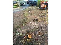Tree Stump Removal / Stump Grinding