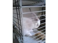 rabbit and indoor cage for quick sale