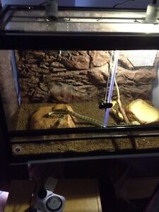 Snake and tank for sale Andrews Farm Playford Area Preview