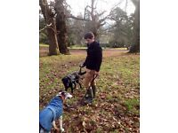 Experienced dog walker - Free 1st walk thereafter £7.20/day - Postcodes AL4 and AL7-10 - Hatfield
