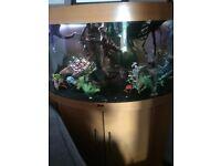 juwel trigon 190litre fish tank full set up