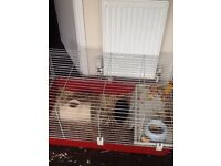 2 Guinea pigs and cage