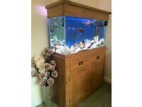 Solid Oak Aquarium stocked with Malawi Cichlds
