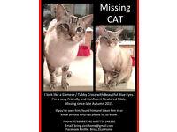 Lost Cat - Reward Offered