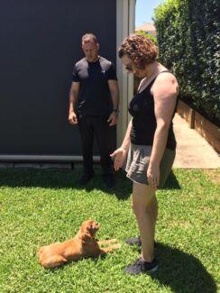 Sulli's Dog Training lessons $50