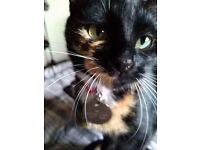 REWARD OFFERED FOR SAFE RETURN - Missing young female Cat