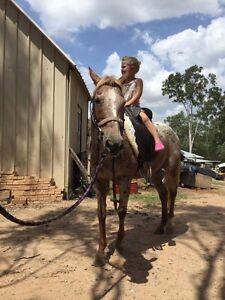 Palouse Pony Jimboomba Logan Area Preview