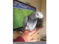 My African Grey Parrot flew away yesterday in Wyke Regis, Weymouth, please look out for Alfie