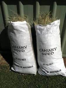 Birds nest grass **November Grass** (Swamp Grass) Cameron Park Lake Macquarie Area Preview