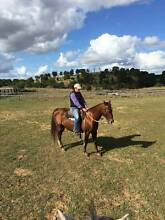 QH MARE REGISTERED Glamorgan Vale Ipswich City Preview