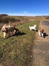 PRIDE PAWS - Dog Walker! Doggy Daycare/Walking & Boarding