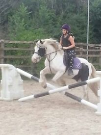 13.2hh pony for share