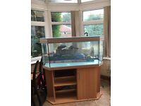 Full aquarium setup available. Absolutely everything you need to setup an aquarium at home £200 ono