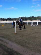 Free Lease or exercise a horse for you Redlynch Cairns City Preview