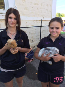 Perfect Petting Parties Mobile & Venue Petting Zoo Aldgate Adelaide Hills Preview