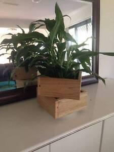 Planter Box Nerang Gold Coast West Preview