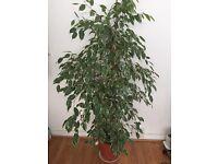 Tall beautiful plant