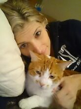 Missing make ginger and white cat from Herne hill Herne Hill Swan Area Preview