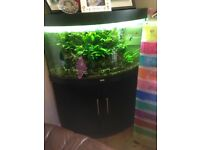Jewel 200litre corner fish tank plus stand