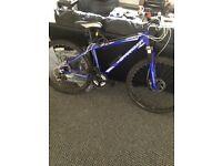 Men's barracuda mountain bike