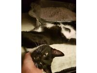 Beautiful male kitten looking for a lovely home