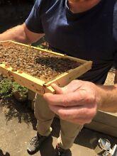 Bee Hives For sale Glen Waverley Monash Area Preview