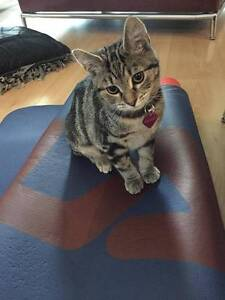 Kitten for sale + play tower Point Cook Wyndham Area Preview