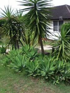 Fruit trees &Garden plants for sale  !! North Parramatta Parramatta Area Preview