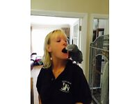 African Grey Parrot and Cage