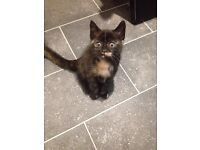 3 EXQUISITE KITTENS FOR SALE
