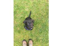 Dog walker, dog walking, pet services, dog sitting, cat sitting, dog border