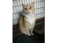 Gorgeous friendly Cat