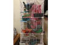 Small animal cage (£30) and/or accessories (free)
