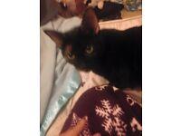 Lost Cat In Kidbrooke