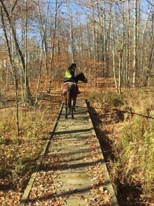 Horse indoor and outdoor board