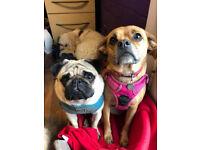 Doggy Daycare Assistant / Dog walker
