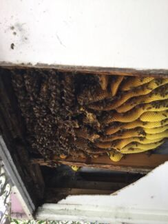 Paul's bee Removal / swarm removal pest control