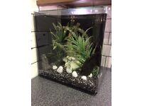 Aqua one 55 litre aquarium fish tank, plec and tetras included