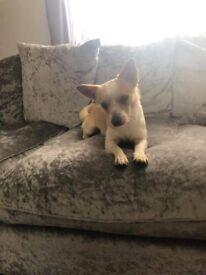 18 month old puppy