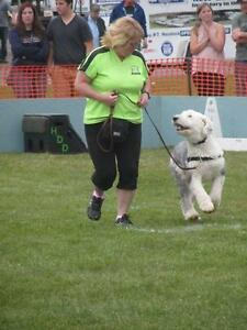 DOG TRAINING - OBEDIENCE, FLYBALL, FUN DOG, BEHAVIOR CONSULTS