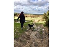 Dog Meets Dog - dog walking/sitting services in Marchwood, Southampton