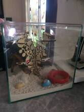 Hermit Crabs with full setup