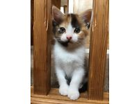 Gorgeous Kittens For Sale 07446012442