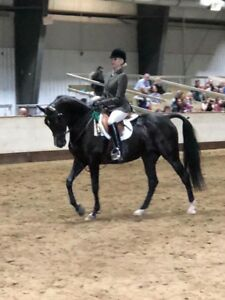 Amazing show mare for lease!